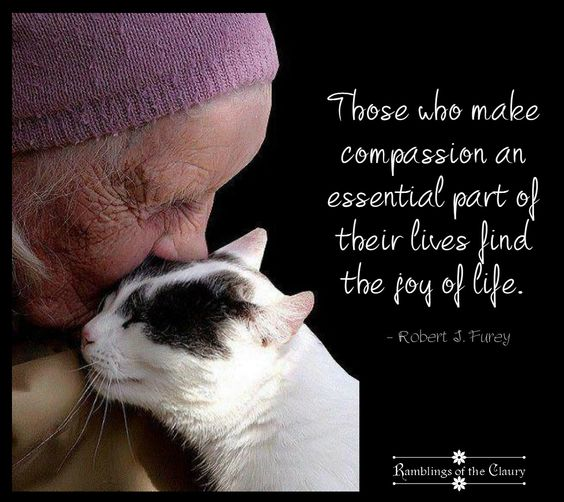 Those who make compassion an essential part of their lives find the joy of life #compassion #joy #animals: