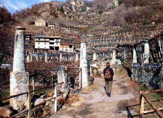 --ITALIA-FOOD-PIEMONTE:il paese di Carema al confine con la Valle D'Aosta by Francesco  -Welcome and enjoy-  #WonderfulExpo2015  #Wonderfooditaly #MadeinItaly #slowfood  #Basilicata #Toscana #Lombardia #Marche  #Calabria #Veneto  #Sicilia #Liguria #ValledAosta #Pollino #airbnb #LiveThere #FrancescoBruno    @frbrun   frbrun@tiscali.it