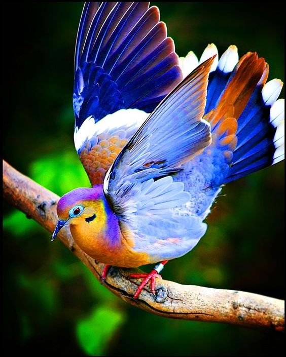 Colorful Bird photographed by Katya Horner