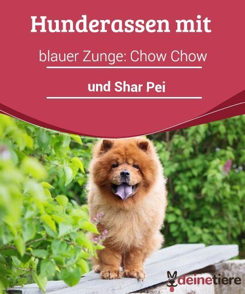 Hunderassen Mit Blauer Zunge Chow Chow Und Shar Pei My Animals Hunde Rassen Hunderassen Hunde