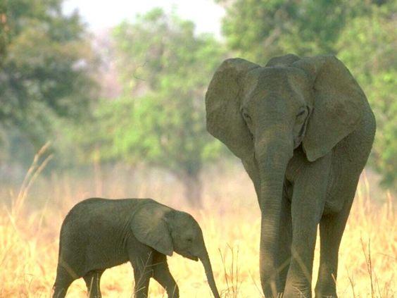i love elephants; wonderful creatures