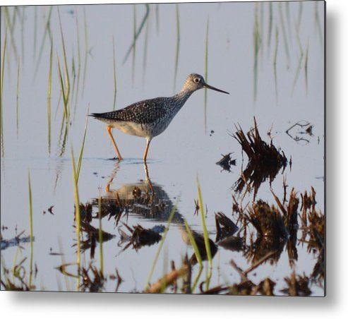 Lesser Yellowlegs Metal Print by Bonfire #Photography