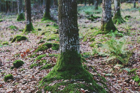 New Forest - Thomas Hanks