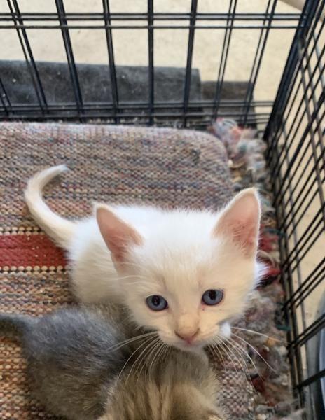 Adorable Litter Boxtrained Kittens Kittens Litter Adorable