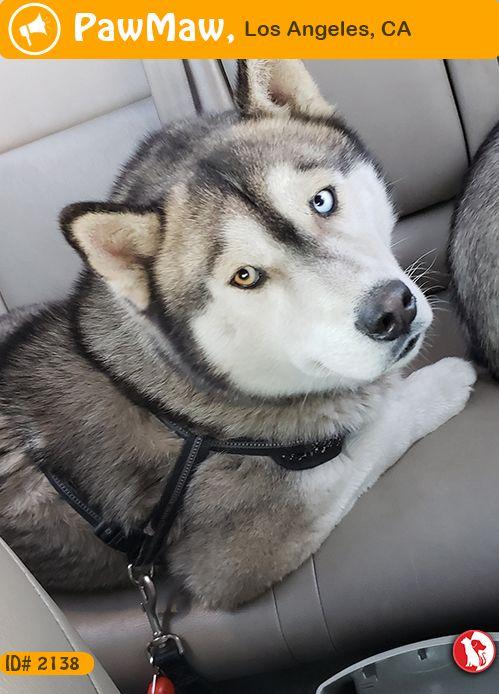 Help Alejandro Garcia Is Found Husky Dogs