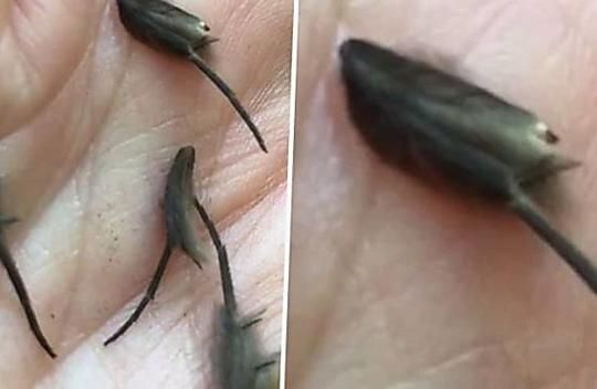 Ekel Fund In Mamas Kuche Niemand Ist Sicher Was Diese Alien Ratten Sind In 2020 Kleine Tiere Tiere Horror Filme