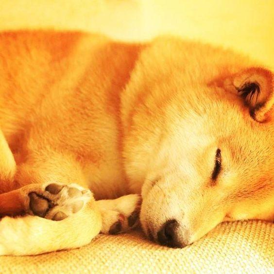 Ele sorri até na hora de dormir! Cão mais feliz do mundo promete deixar o seu dia melhor - Fotos - R7 Bichos