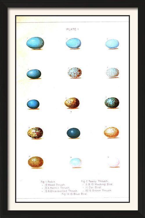 Wild Eggs Vintage Poster Art 11 X 17 In 2020 Vintage Posters Vintage Poster Art Poster Art