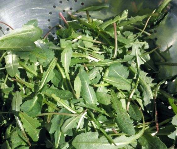 Dandelion pesto | Recipes | Pinterest | Dandelions, Pesto and Diy ...