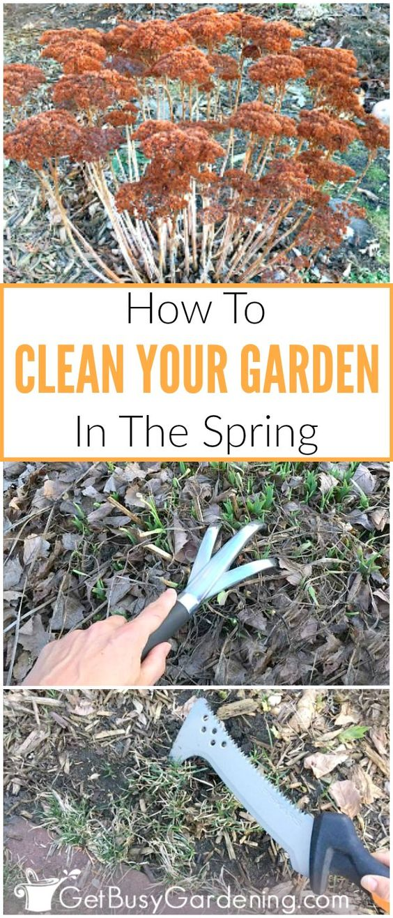 Garden spring cleaning is important to help keep your gardens disease and weed free, and looking their best. Wait to start cleaning the garden in the spring until the ground has thawed and dried out a bit. Use this spring garden clean up checklist to help make it easier to get the job done. (AD)