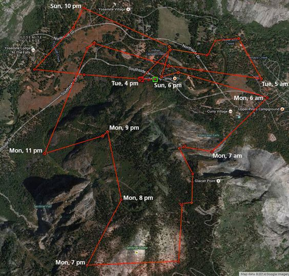 GPS tracking map of bears in Yosemite. Image courtesy of NPS