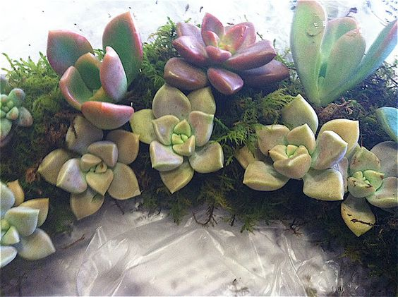 Gilded Palm: Pinterest Results .... Succulent Wreath and Sea Glass Effect
