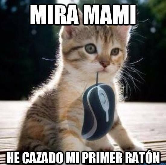 Memes Chistes Humor Funny Invequa Gato Gatos Catmemes Memes En Espanol Memes De Gatos Meme Funny Dog Memes Funny Animal Memes Funny Grumpy Cat Memes