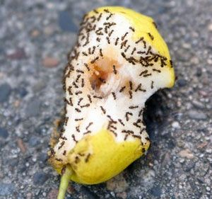suggestions for getting rid of ants in the kitchen