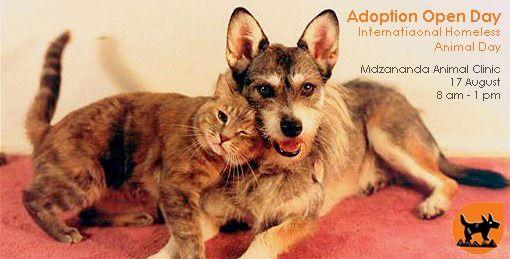 Southafrica Capetown Ihad Internationalhomelessanimalsday Mandelapark Khayelitsha Mdzananda Animal Clinic Pet Clinic Pet Day Animals