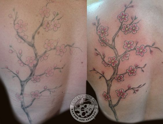 Cherry blossoms re-work by Erica Cyr #ascendingkoi #tattoos #sakura #cherryblossoms #flowers