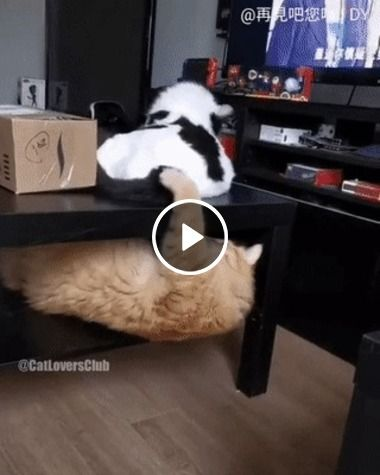 O gatinho não gostou do insulto e meteu o tapa na cara do outro!!