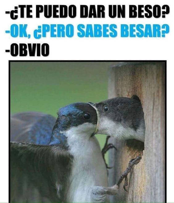 Pos claro ... TOMA!! #memes #chistes #chistesmalos #imagenesgraciosas #humor http://www.megamemeces.com/memeces/imagenes-de-humor-vs-videos-divertidos
