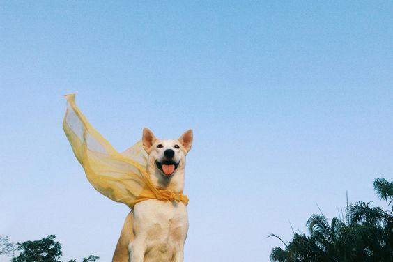 Gluta Thai Way Dog FMDBGFriends Pinterest Dogs Dog - Meet gluta the smiling dog that beat cancer