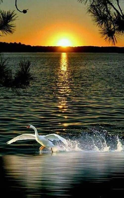 Real Cool Natural Sunset With Beautful Bird Nature Pictures Nature Photography Beautiful Nature