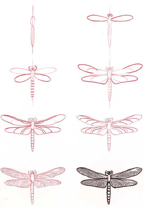 Learn to draw: Dragonfly