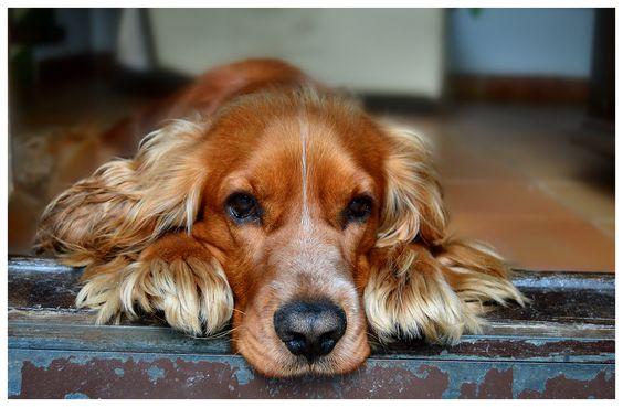 Fotografías de mi perro Bru