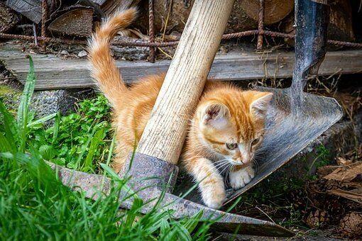 صور منوعة للعروض الت قديمية خلفيات 492 Cats Animals Cat Day