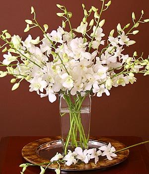 "do NOT like a too ""splayed"" look with the dendrobiums. would rather mix them with other flowers if need to."