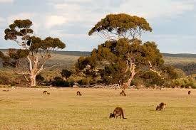 Resultado de imagen para australia paisajes canguros