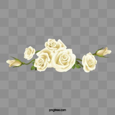سكب الورود البيضاء انسكب وردة بيضاء ورود Png وملف Psd للتحميل مجانا White Rose Png White Roses Flower Png Images