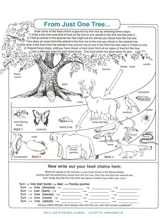 Printables Ecology Worksheets For High School trees activities and food chains on pinterest decomposers worksheets for kids archbold biological station ecological research conservation
