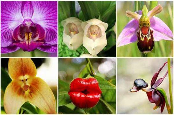 Extravagantes orquídeas que parecen otras cosas   La Bioguía