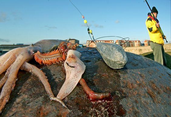 Planet Sea Fishing Digital Magazine | Tutorials | Squid baits laid bare