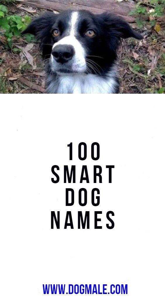 100 Smart Dog Names Dog Names Smart Dog Male Dog Names Unique