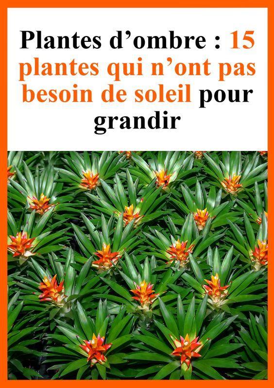 Plantes D Ombre 15 Plantes Qui N Ont Pas Besoin De Soleil Pour