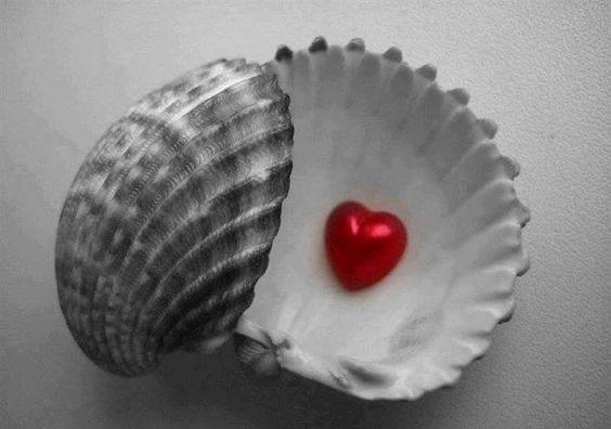 Post  #: Cuide do seu coração, o mundo é a concha, não é a ...