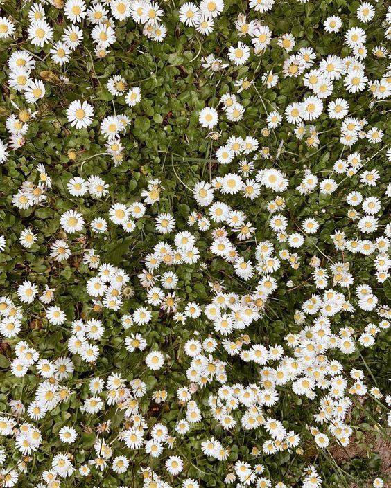 Among the daisies 🌱🧚🏻♀️ . . . #daisies #nature #gardens #faeries #exploreengland #aesthetic