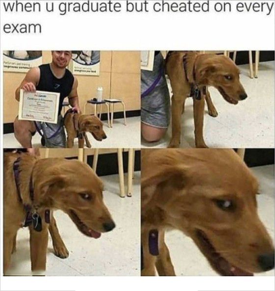 Assignment Help Au Crazy Funny Memes Funny Relatable Memes Really Funny Memes