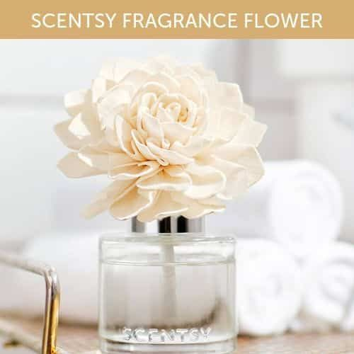 New Scentsy Fragrance Flower With Images Scentsy Fragrance