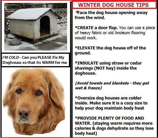 Winter Dog House Tips Winter Dog House Warm Dog House Outdoor