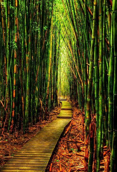 Bamboo Forest-Kauai, Hawaii.. Been here<3 it's kinda slippery.. Take me backkk