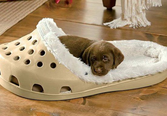 Giant Shoes Bed Is Here For Dogs Who Just Love Slippers Dog Bed Crocs Unique Dog Beds