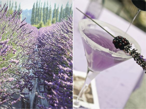 Lavender and blackberry