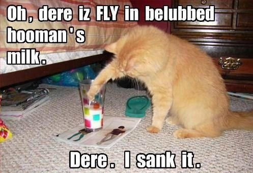 52 Cat Photos That Make You Smile Every Time You See Them With Images Cats Funny Animal Memes Funny Cats