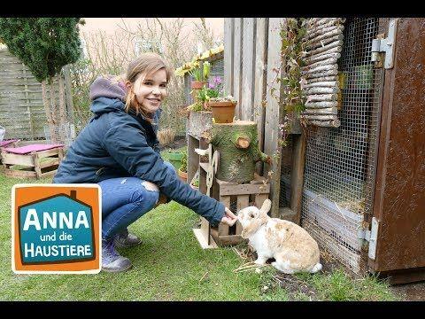 Zwergkaninchen Information Fur Kinder Anna Und Die Haustiere Youtube Zwergkaninchen Kaninchen Haustiere