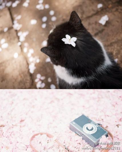 Muzisu生活志的照片 - 微相册