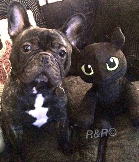 French Bulldog And Toothless From How To Train Your Dragon
