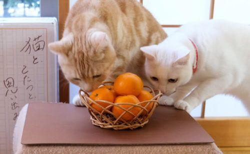 置き場所に困らない 室内ドアの側面に設置できる猫ハウス Cat Press 猫ハウス 猫 室内ドア