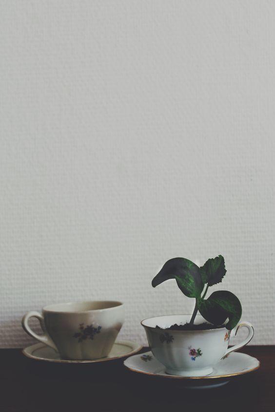 tasses vintages et planton de courge