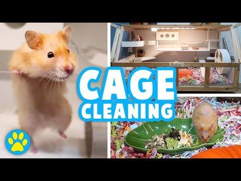 Deep Cleaning Iodine S Cage Hamster Allergies Vlog Youtube Hamster Cage Cleaner Hamster Bedding